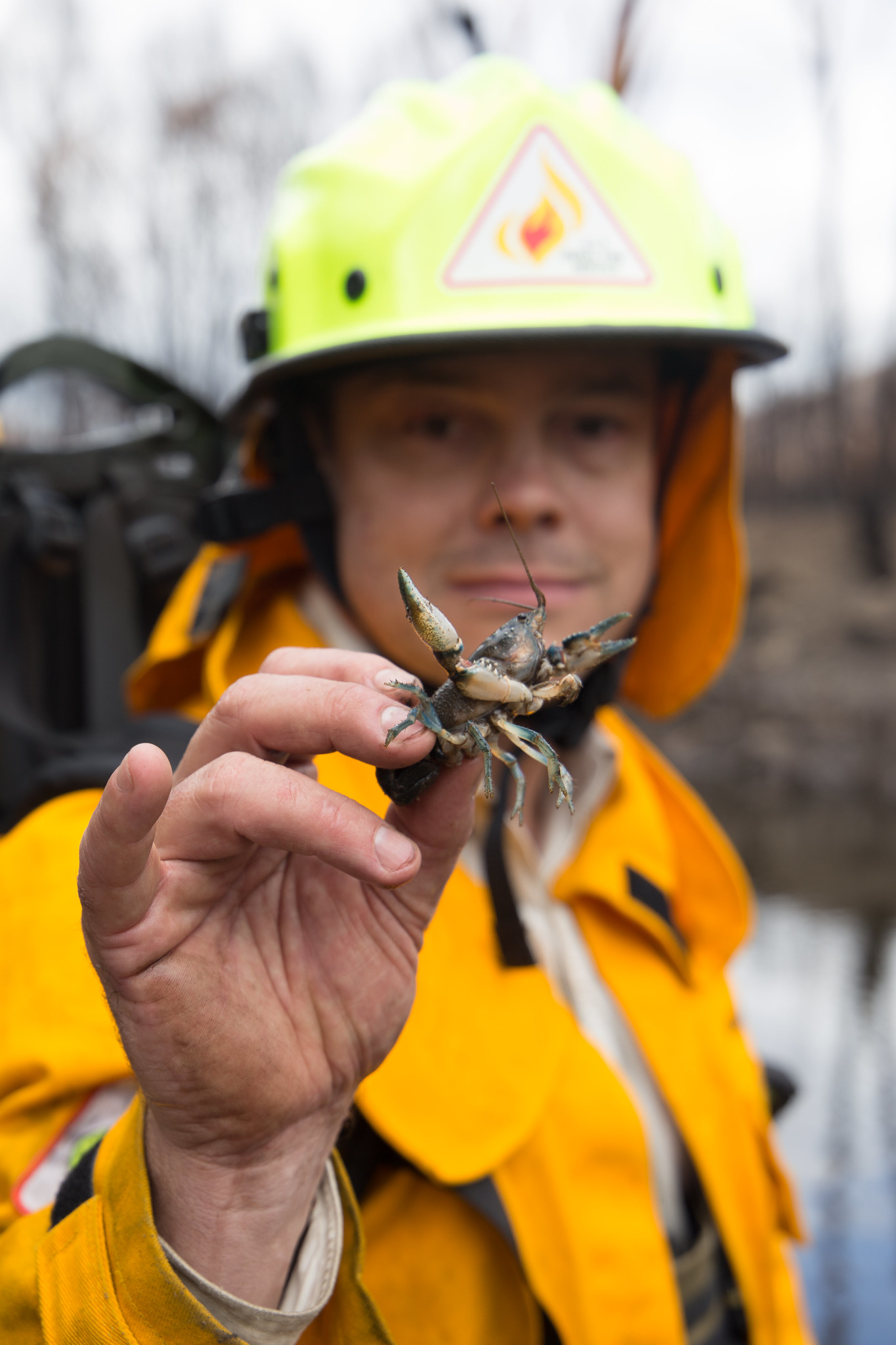 Fireman holding insect