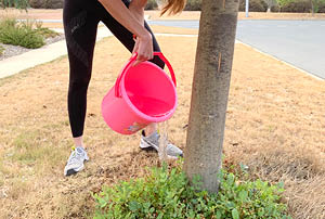 A person watering a street tree with a red bucket.