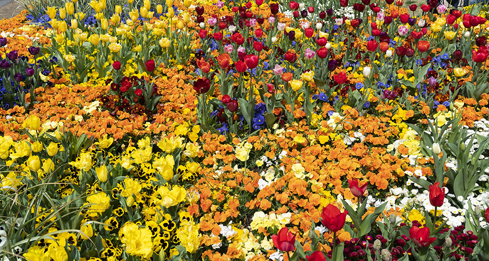 A bed of colourful flowers