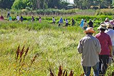 Guided walk at Jerra Wetlands