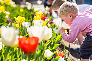 A boy sniffing a tulip at Floriade in Canberra