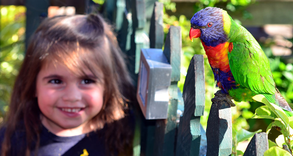 Young girl with parrot