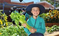 Student in veggie garden holding celery