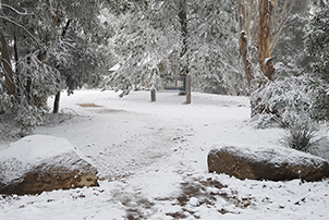 Snow at Namadgi, Canberra