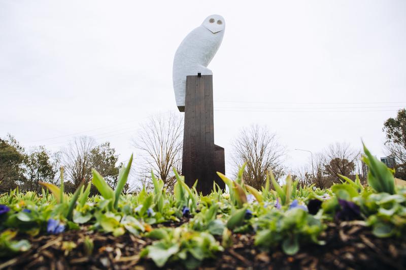 Belconnen owl