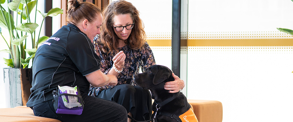Therapy dog, Quota supports a witness at court.
