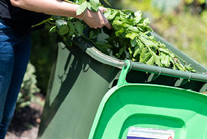 Person placing vegetation into green bin.