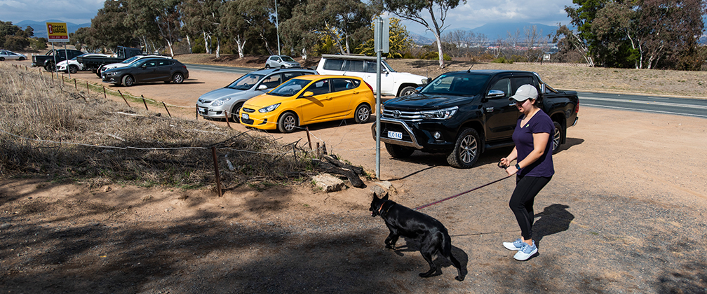 A woman and dog starting to walk up Mount Taylor after parking at the Sulwood Drive carpark.