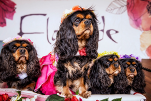 Dogs sitting in their costumes at last year's Dogs' Day Out at Floriade.