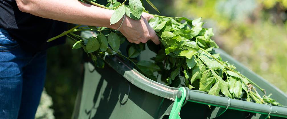 Person placing vegetation into green bin.