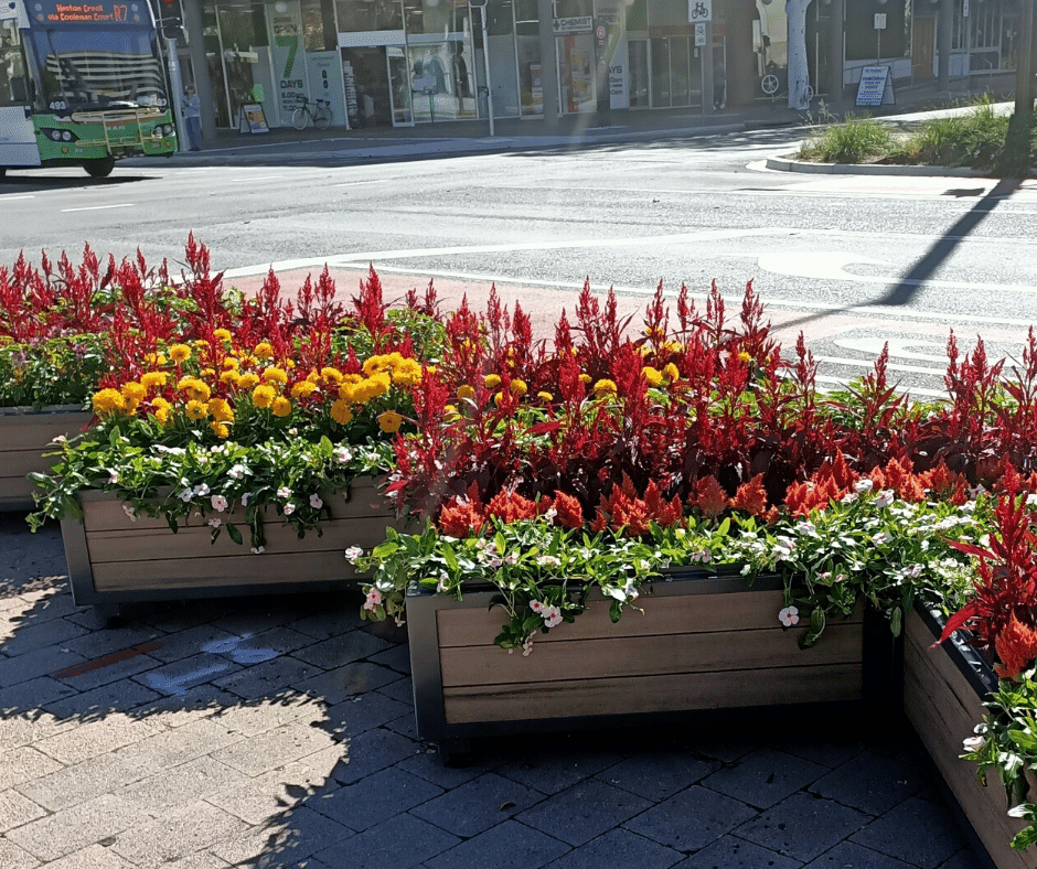 3 boxes of flower planters