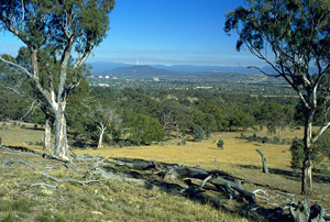 An image of a nature reserve in Canberra.