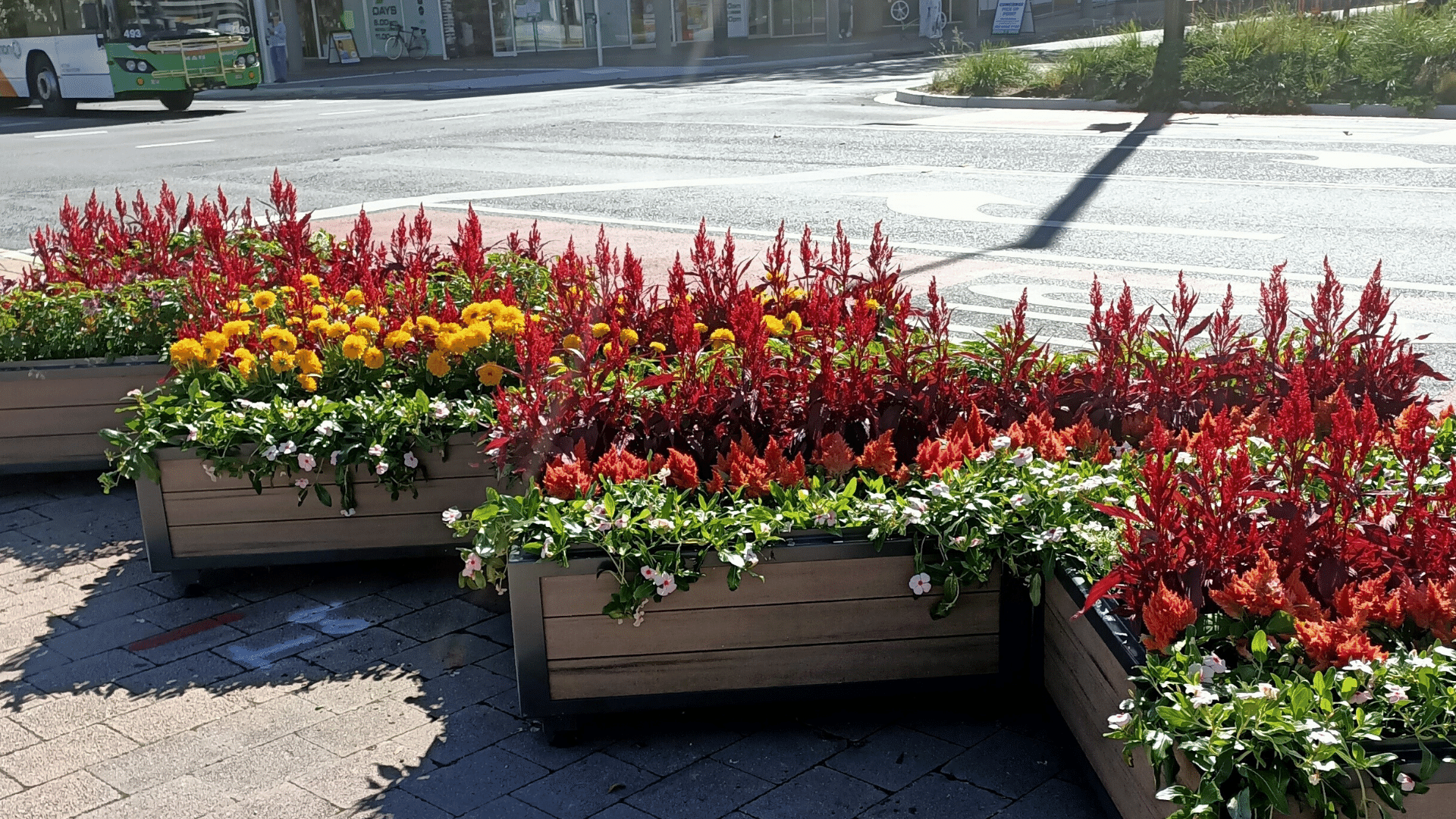 4 flower boxes of plants in the city