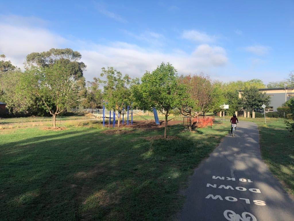 bike rider on footpath near transplanted trees in Lyneham