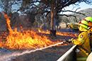 thumb-bushfire.jpg
