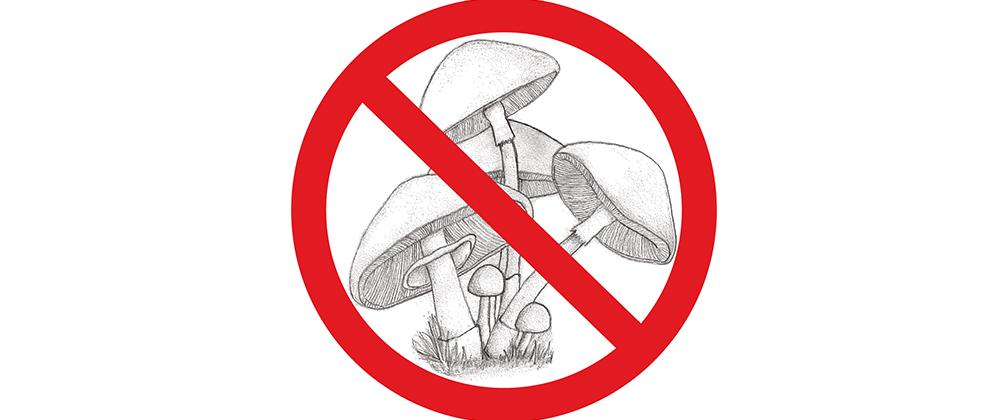 An illustration of mushrooms.
