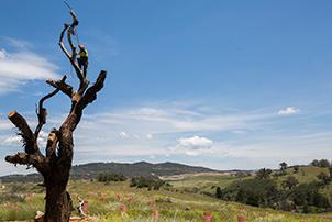Tree at Barrer Hill