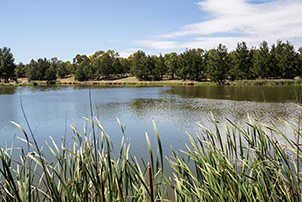 Long view of Isabella pond with reeds in foreground