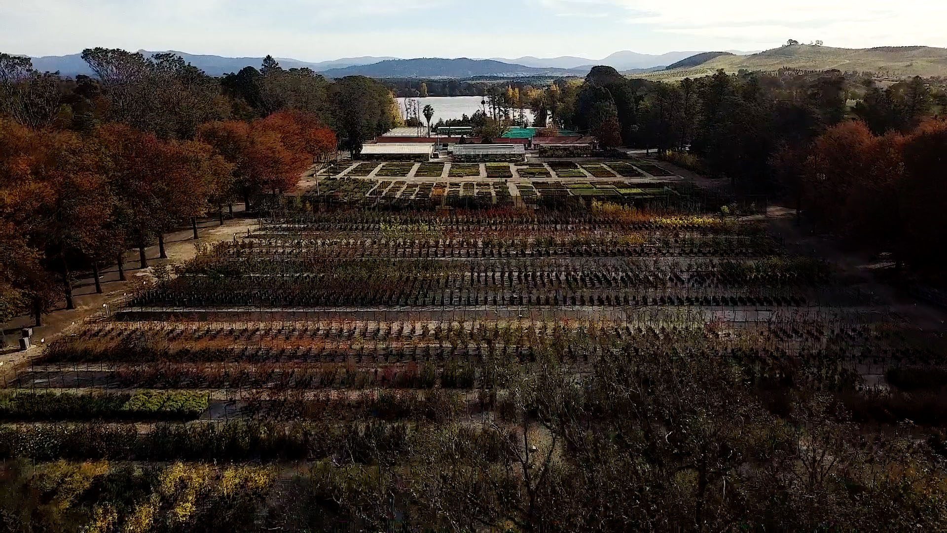Bird's eye view of the Yarralumla Nursery